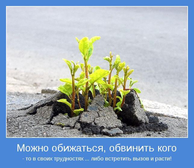 Можно обижаться, обвинить кого-то в своих трудностях... либо встретить вызов и расти!